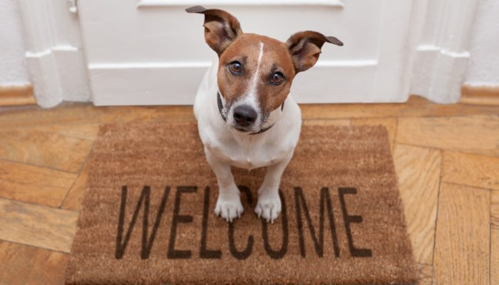 Jack Russell dog sitting on a welcome mat