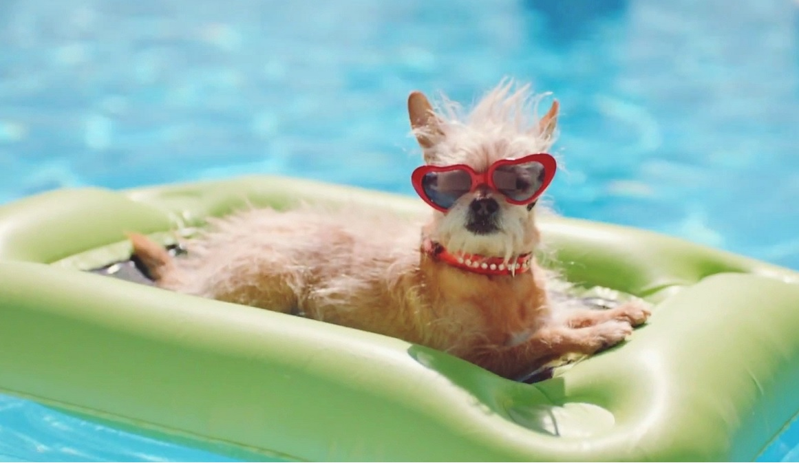 Dog with heart shaped sunglasses on pool lounger in pool