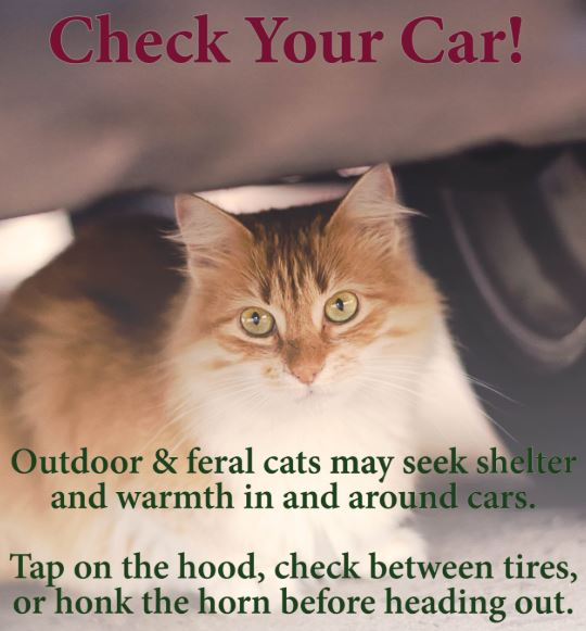 check your car for cats in cold weather