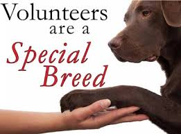 Volunteers are a special breed, has a dogs paw in a person's hand