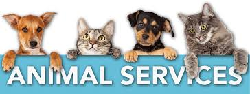 Animal Services with two dogs and two cats