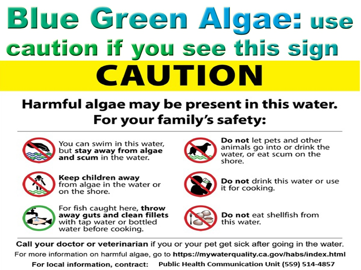 Blue Green Algae: use caution entering the water when you see this sign